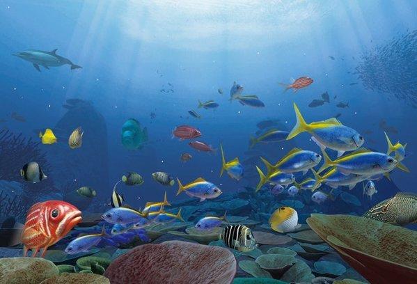 The Ocean Creatures Lorem Ipsum Generator - Randomize